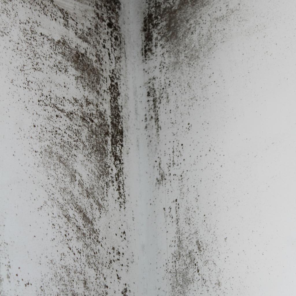 mold remediation service